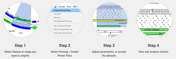 2 Primer Design for PCR