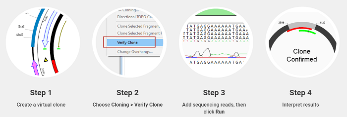 4 Clone Sequence Verification