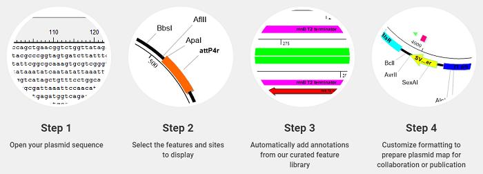 5 Plasmid maps SeqBuilder Pro review